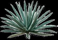 Americana Oaxacensis