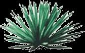 Rhodacantha